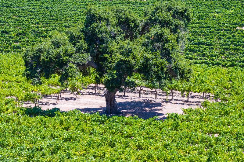 Firestone Winery_Los Olivos-9682.jpg