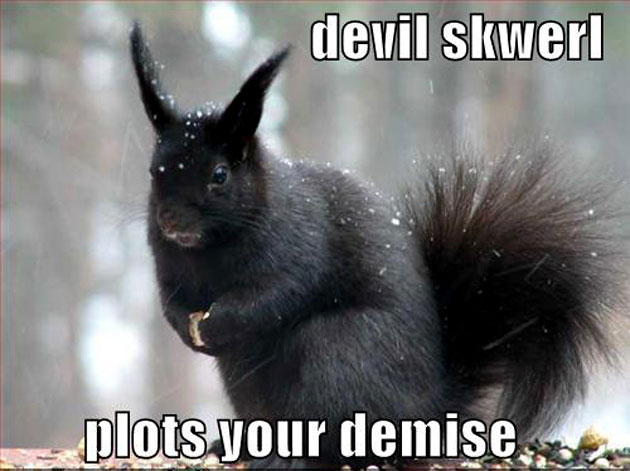 devil squirrel