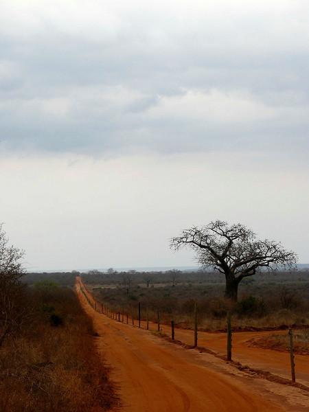 Tsavo East Road Straight tree.jpg
