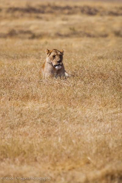 Ngorongoro-22.jpg