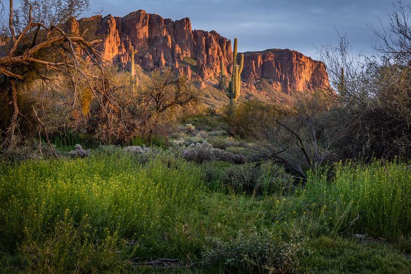 Arizona (1).jpg