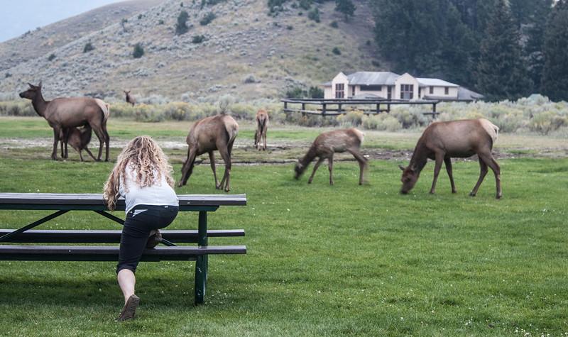 Yellowstone-8793.jpg