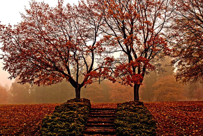 Foggy_Park_HDR4Vin.jpg