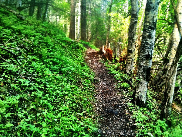 Running In The Woods - 7 August 2011