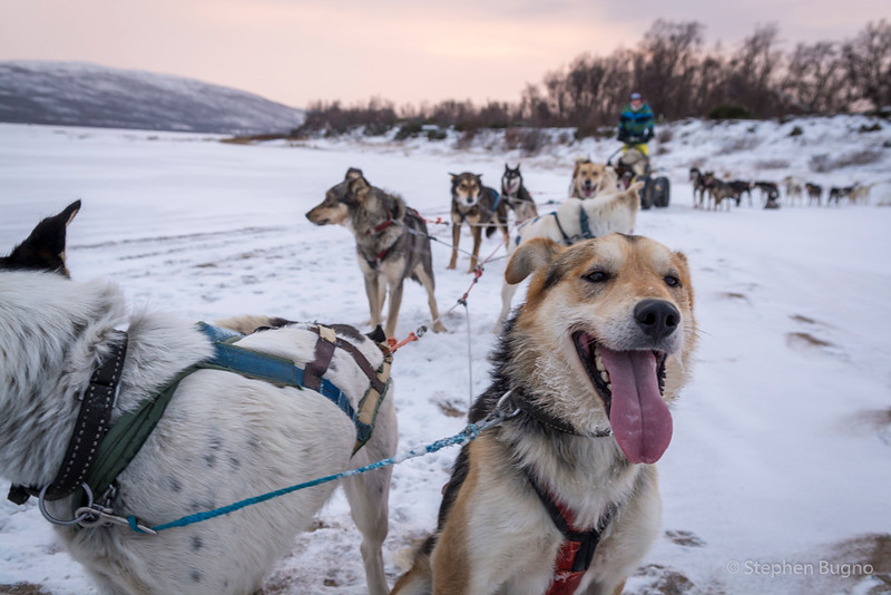 Dog Mushing-9903.jpg
