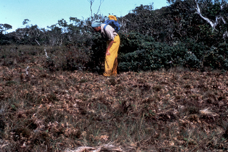 Midcamp Bog: pig damage; November 1981; Carmel Crivellone (photoID: bhg002040)