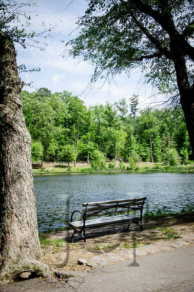 Forest_Hill_WM-1687.jpg