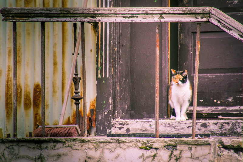 Disdainful tabby cat in open door with peeling paint, rusty balustrades and an old broom.