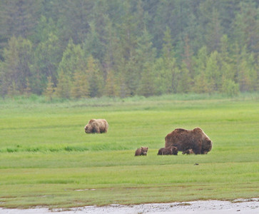 Bears Katmai and Lake Clark 2010