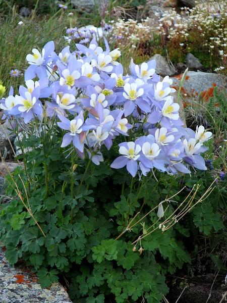 amh FLOWERS (1407).jpg
