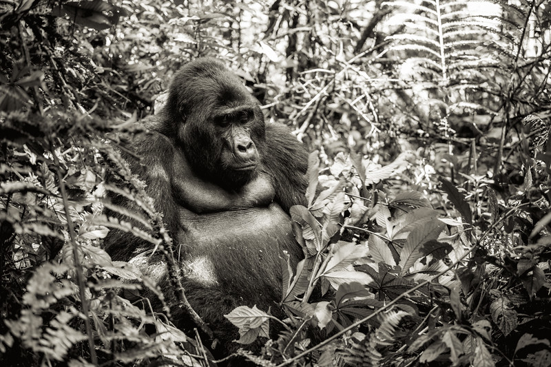 Uganda_T_Gor-349.jpg