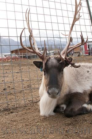 2017 FALL FESTIVAL ~ Palmer Reindeer Farm