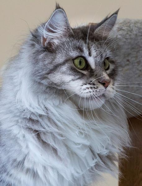 Kittens237.jpg