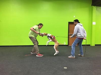 Michael Ellis School for Dog Trainers