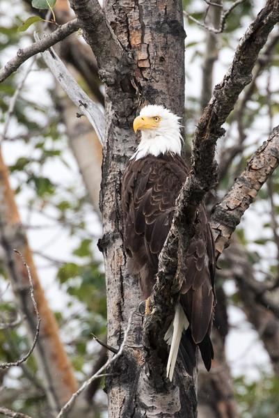 Alaska 2015 - Skagway -  072715-140.jpg