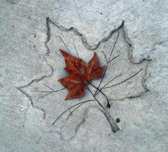 leaf in leaf.jpg