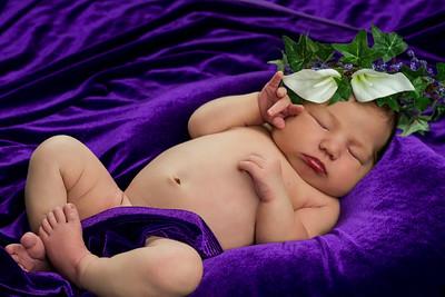 Donna's Newborn Portraits