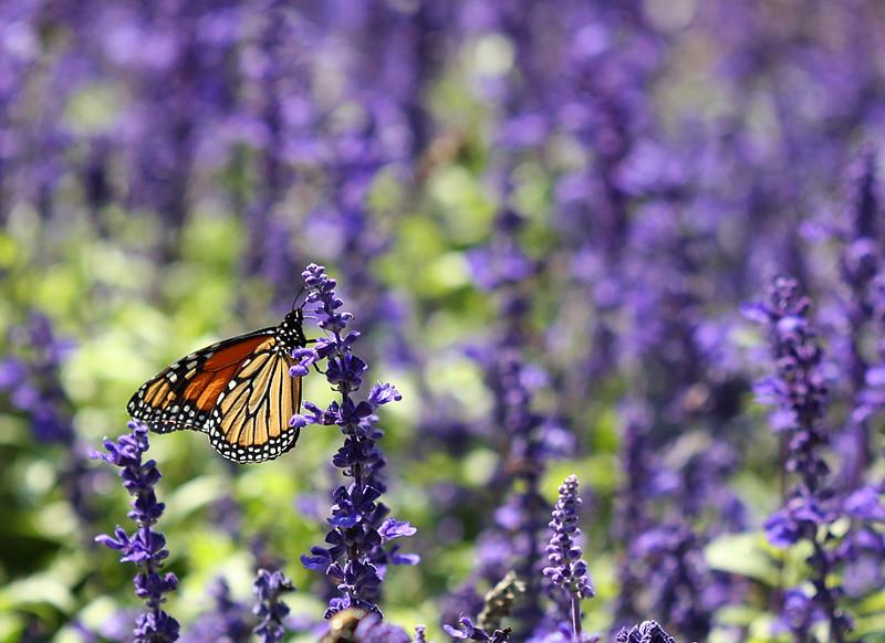 butterfly_245641212_o.jpg