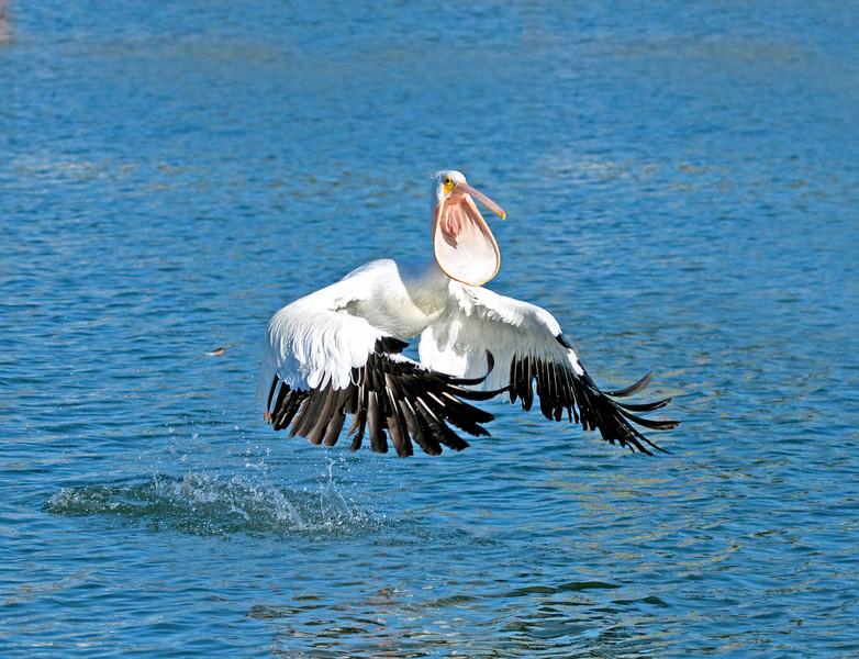 IMG_0002 w-pelican toilet bowl wo bush