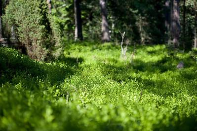 2010.06.10.-12 Porkkalanniemi
