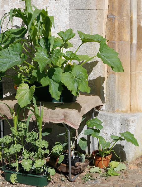 01. Gardener's World_05A8959.jpg