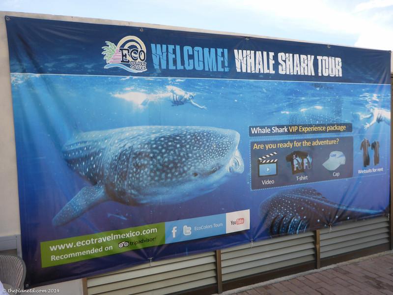Whale-sharks-mexico-5.jpg