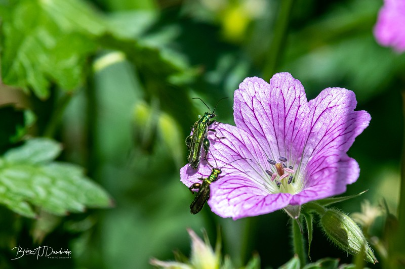 Insect_Life-3564.jpg