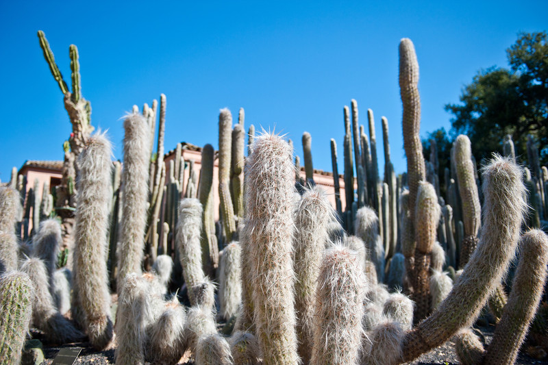 Cacti on the way to Ganna Walska's house.