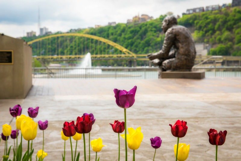 """Mr. Rogers' Tulips"" - Pittsburgh, North Shore   Recommended Print sizes*:  4x6  