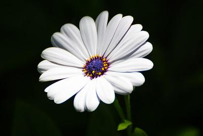 Tamron 70-300mm bugs & flowers 083016