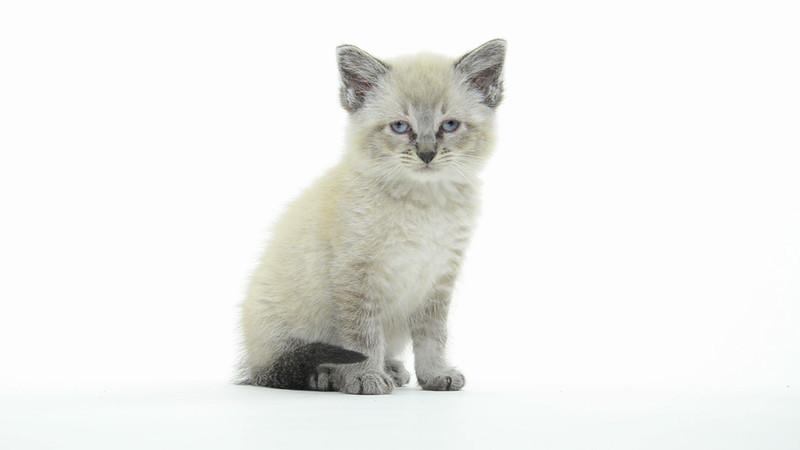 Kitten_04_IS_HD.mov