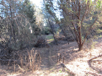 Poison Oak Trail Repairs