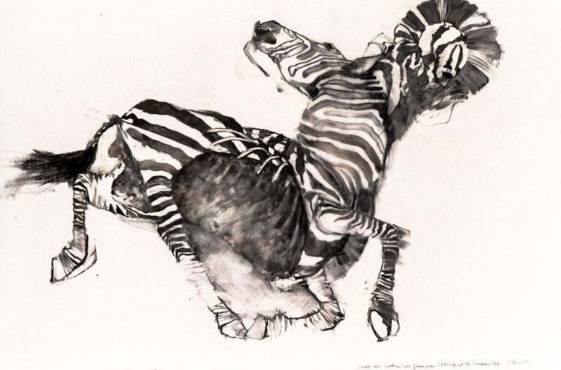 Southern Cape Zebra - Study (1993)