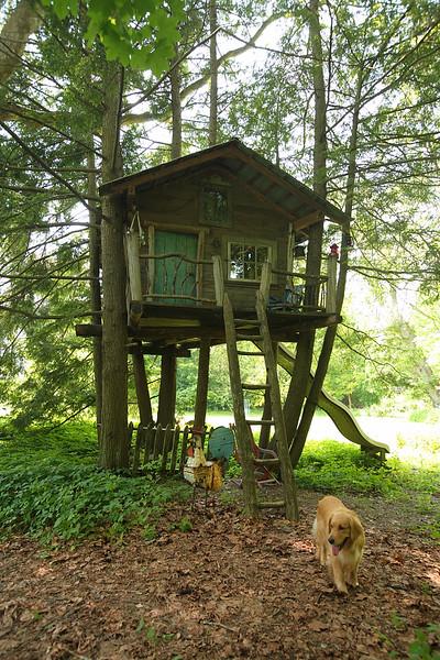 Schwartz, Jill ORIGINAL / Tree House
