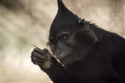 Monday Morning Monkey