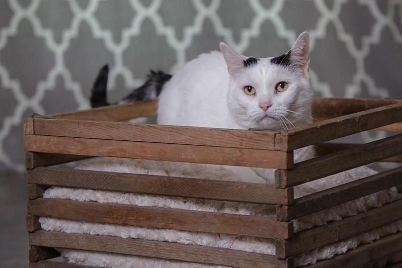 Polzin Cats-8.jpg