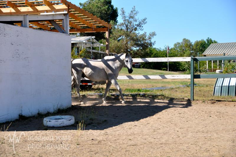 EB&Horses-124.jpg