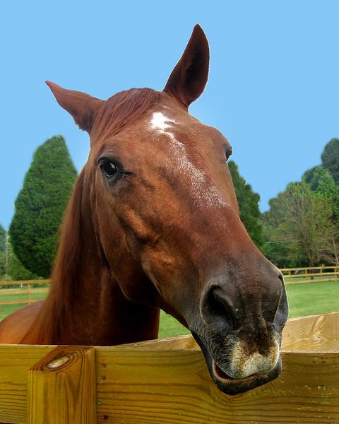 horse 3-.jpg