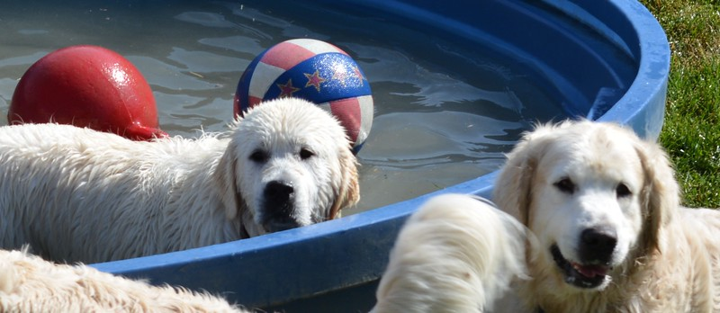 Gander in the pool & Timber Smiling for the Camera