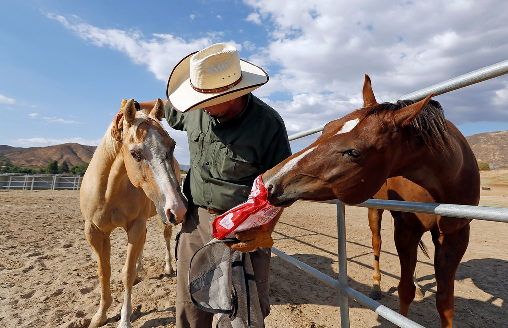 . Leo Grillo pats one horse while another, Max, tries to sneak a treat from a bag at Grillo\'s DELTA (Dedication & Everlasting Love to Animals) Rescue complex in Acton, Calif. on Aug. 29, 2013. (AP Photo/Reed Saxon)