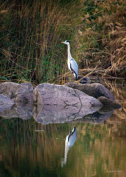 Feb272013_nile_birdwatching_unfinished_obelisk_philae_4812.jpg