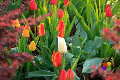 Flowers 2012 (1)