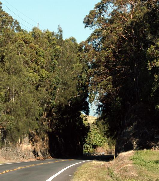 20080416- Hawaii 21- Weds Morning Road Trip DSC_3588-15.jpg