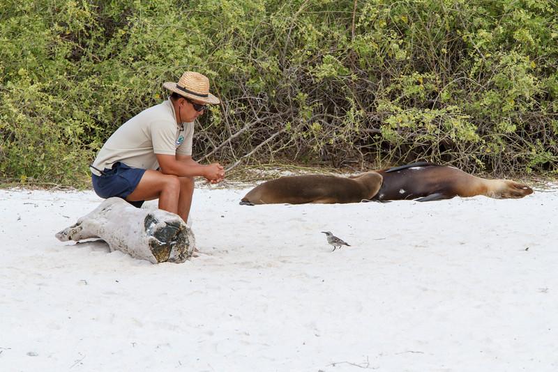 Franklin Ramirez with Galapagos Sea Lions and Espanola Mockingbird at Gardner Bay, Espanola, Galapagos, Ecuador (11-21-2011) - 766.jpg