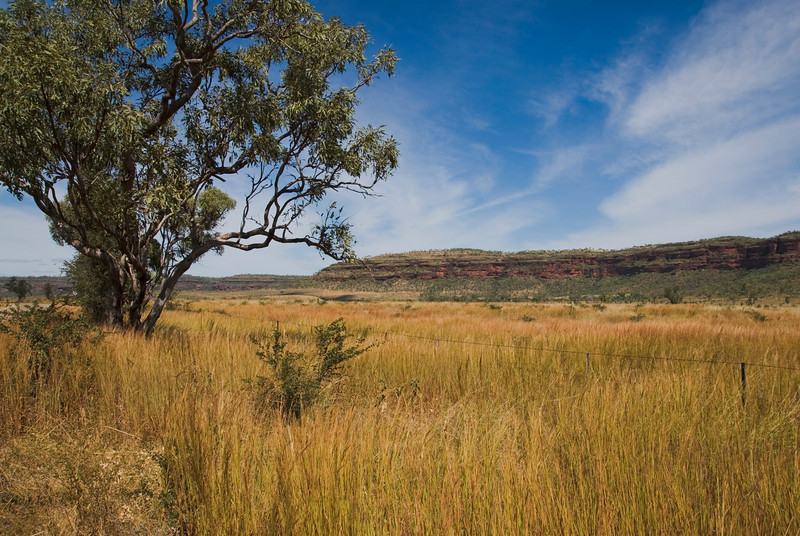 Scene from Roadside, Gregory National Park - Northern Territory, Australia