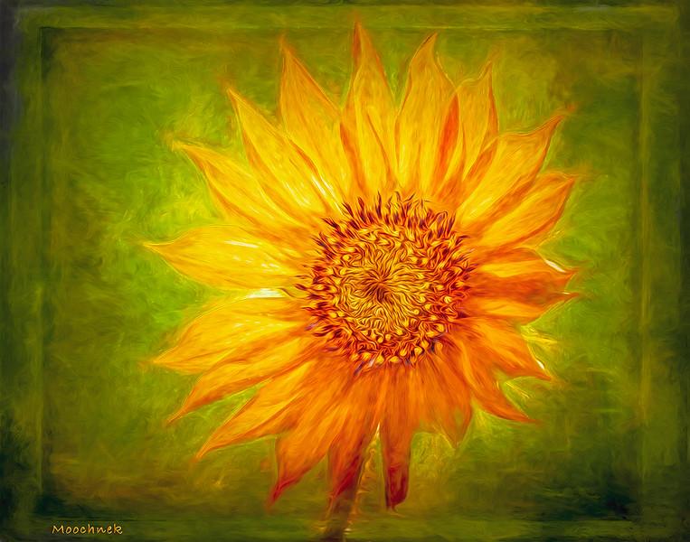 Sunflower1-copy.jpg