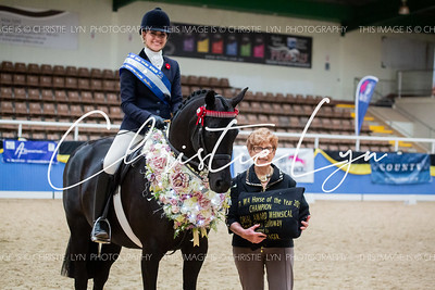 Class 24: Whimsical Memorial Award Small Show Galloway over 14 hh up to & inc 14.2 hh