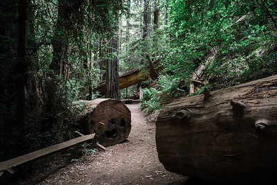 Armstrong Redwoods (Sept 2017)