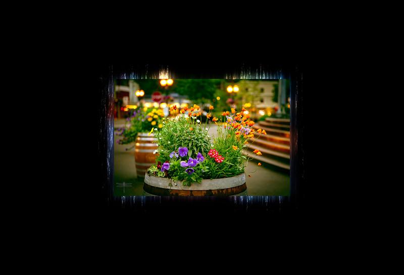 Flowers_gangway_Skagway_BL8E7130.jpg