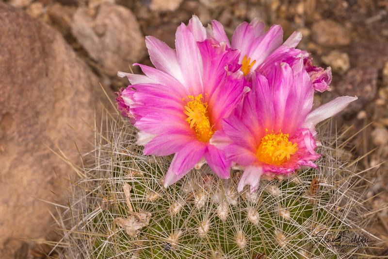 TBG cactus 3-11-2018a-4253.jpg